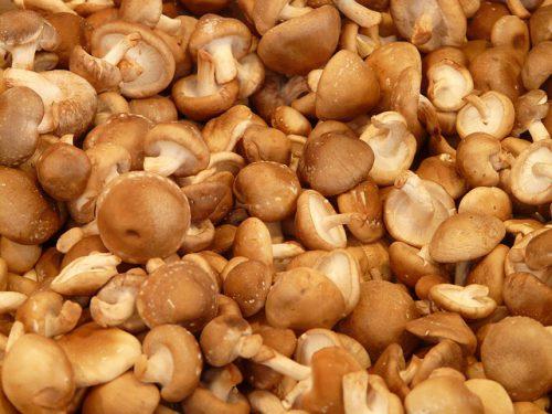 jamur-shiitake