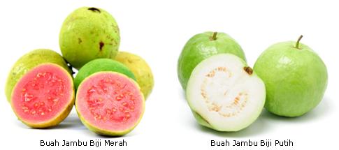 Manfaat-Jambu-Biji
