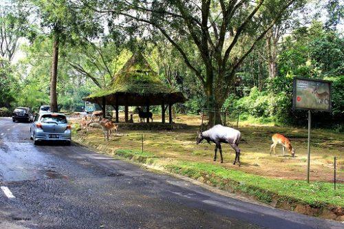 wisata-taman-safari