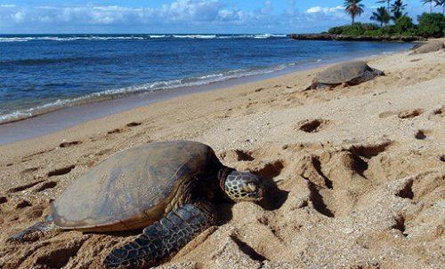 Wisata Pantai Terindah di Dunia