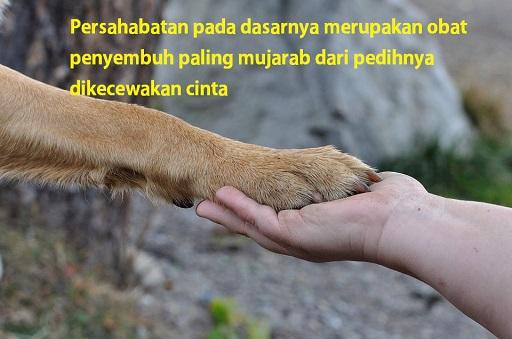 Persahabatan adalah obat