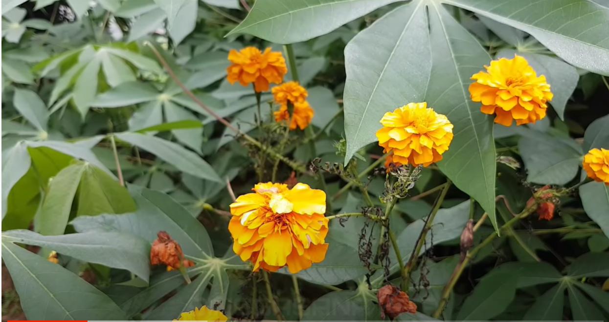 Bunga Desa Sukawangi