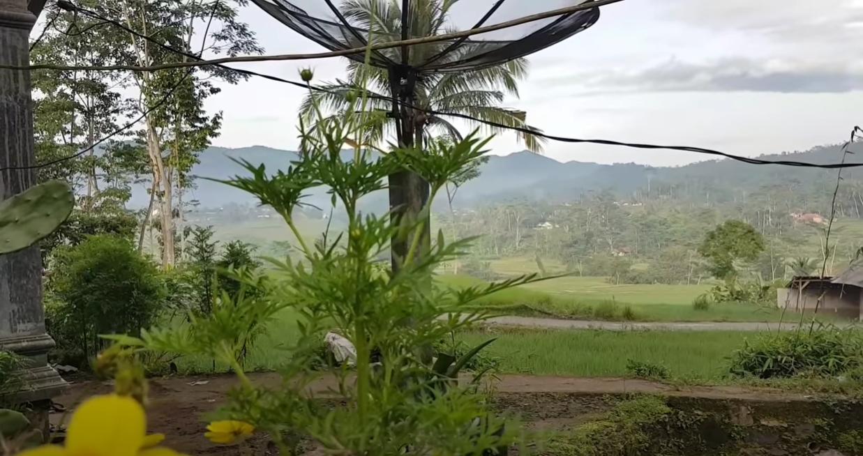 Pemandangan dari rumah penduduk